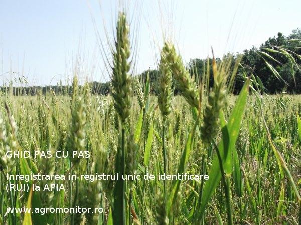subventii-2014-agricultura-registrul-unic-de-identificare-apia