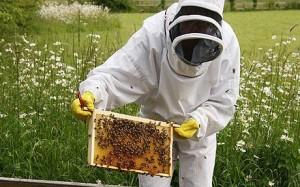 subventii albine programul national apicol 2014