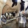 subventii-bovine-2014-plata-subventiei