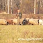 subventii-ovine-caprine-2013