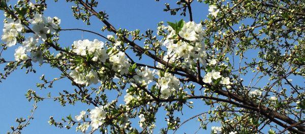 suprafata-livezi-reconversie-pomi-fructiferi-2014
