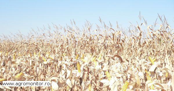 terenuri-agricole-romania-2013-2014