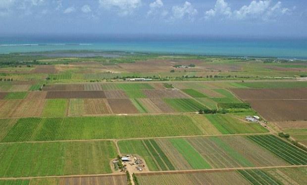 terenuri-agricole-straini