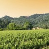 vin-podgorie-vita-de-vie-ceptura-dealu-mare-prahova